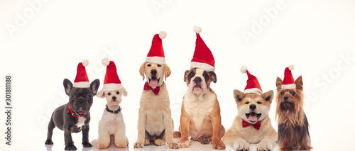 Obraz na plátne  6 happy dogs celebrating christmas together