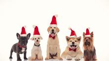 Adorable Group Of Little Santa...