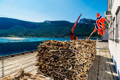 Stockfish, dried by cold air and wind, at the fishing harbor Norway