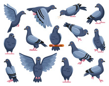 Pigeon Of Peace Cartoon Vector Illustration On White Background.Vector Illustration Set Icon Dove Of Bird .Isolated Set Cartoon Icon Pigeon.