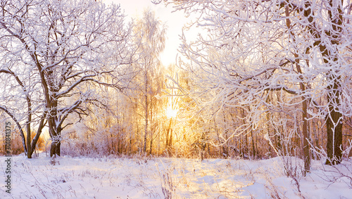 Obraz snowy winter landscape panorama - fototapety do salonu