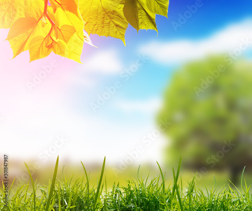 Foto auf Leinwand Gelb Green leaves with grass and blurred background with park against sky with sunlight