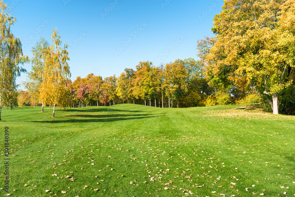 Fototapety, obrazy: Autumn trees in forest on green grass field