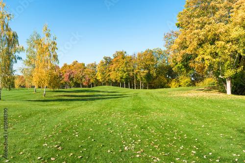 Fotografia  Autumn trees in forest on green grass field