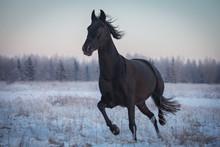 Black Horse Running At Sunset