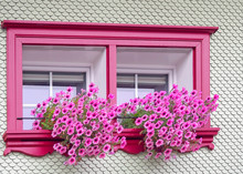 Bright Pink Window Frame With Pink Petunias In Window Box