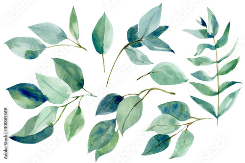 watercolor illustration, set of eucalyptus leaves on an isolated white background, hand drawing