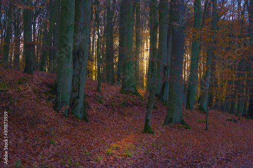 Recess Fitting Magenta Autumn landscape, trees in the park forest green yellow red leaves branches, shimmering light warm sun nature views