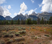 Grand Teton Mountains With Clouds, Elk Taking A Rest