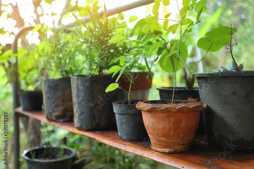 Photo  plantation small tree in pot plant