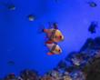 canvas print picture - picture of the aquarium. Colorful fish