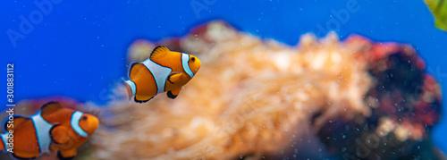 picture of the aquarium. Colorful fish Tablou Canvas