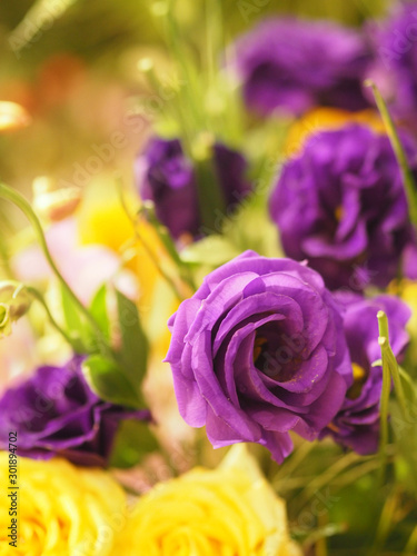 Rose Flower violet color arrangement Beautiful bouquet on blurred of nature background