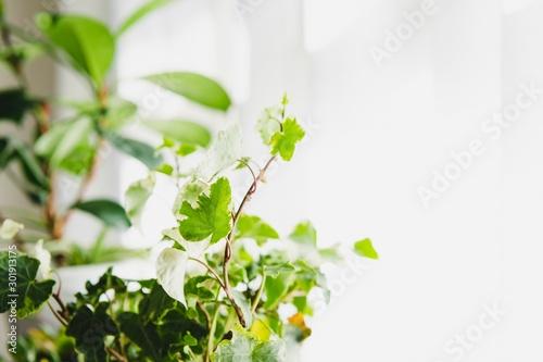 観葉植物 Fototapet
