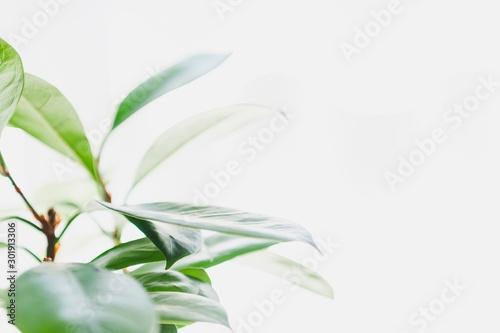 Valokuvatapetti 観葉植物