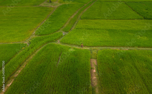Foto op Plexiglas Groene A ricefield and landscape near the city of Takeo in Cambodia