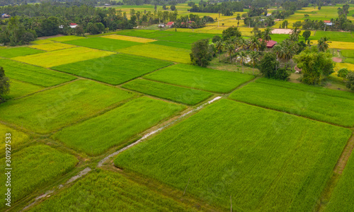 Fototapety, obrazy: A ricefield and landscape near the city of Takeo in Cambodia
