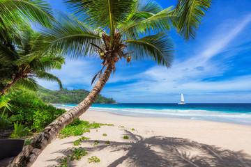 Fototapeta Optyczne powiększenie Tropical paradise beach with white sand and coconut palm trees.