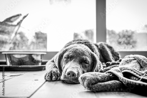 Sleepy Bessie Fototapet
