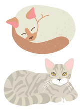 Domestic Animal, Feline Look, Sleeping Tomcat, Home Cat, Mammal Character. Tabby Kitty, Adorable Whisker And Paws, Posing Element, Gib Set . Vector Illustration In Flat Cartoon Style