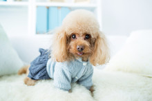 LWTWL0020216 Cute Dog Resting In Livingroom
