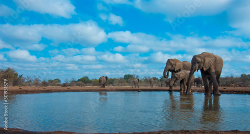 Beautiful Images of of African Elephants in Africa Wallpaper Mural