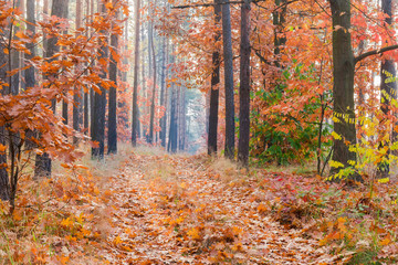 Fragment of deciduous and coniferous forest with footpath in autumn