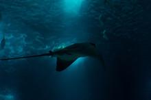 Underwater World In Deep Water...