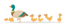 Mother Duck. Row Of Wild Ducks Birds Family Walking Vector Cartoon Collection. Duck Mother, Wild Duckling Illustration