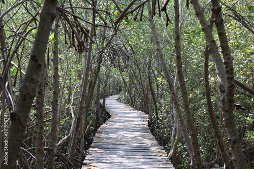 Spoed Fotobehang Weg in bos The wooden bridge in the mangrove forest extends to the sea