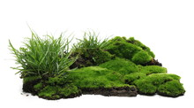Green Moss On Soil, Dirt Pile ...