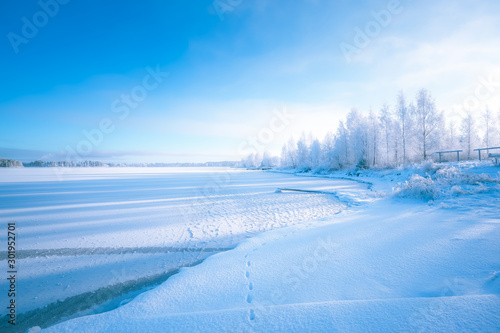 Foto auf Leinwand Himmelblau Cold winter day landscape with snowy trees. Photo from Sotkamo, Finland.