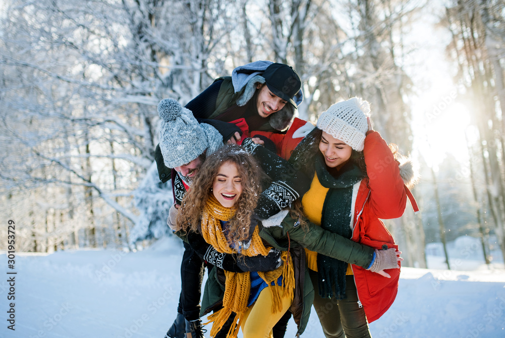 Fototapeta Group of young friends on a walk outdoors in snow in winter forest, having fun.