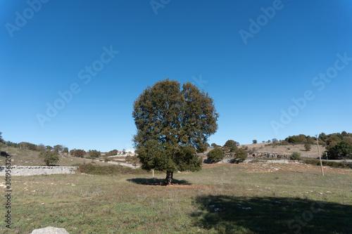 Fototapety, obrazy: Albero nel campo