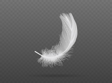 Falling White Bird Feather  Ve...