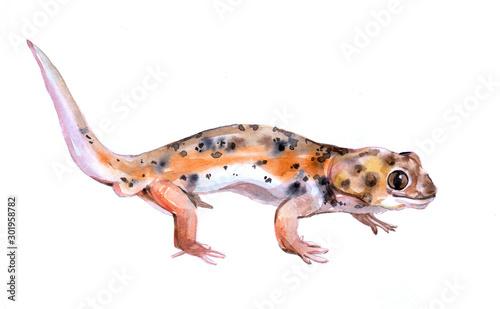 Fotografie, Obraz Watercolor single lizard animal isolated on a white background illustration