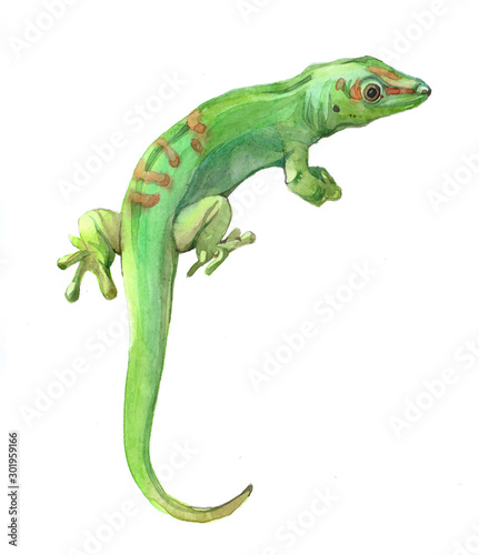 Watercolor lizard animal illustration isolated on white background Poster Mural XXL