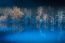夜の青い池