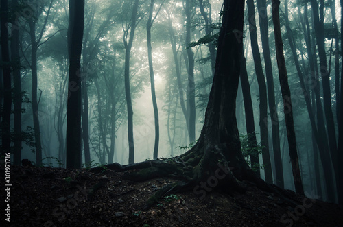 tree in dark mysterious fantasy forest Fototapete