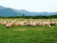 A Pasture Of Sheep At The Foot...