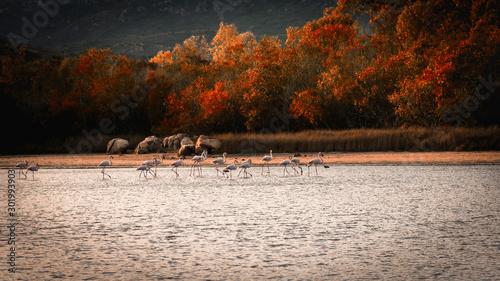 Recess Fitting Gray traffic Pink flamingos in the pond of Cala Brandinchi, San Teodoro, Olbia-Tempio, Sardinia