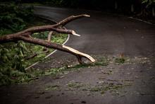 Falling Tree Debris Block Road...