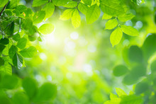 Green Leaf On Blurred Nature Background With Beautiful Bokeh And Copy Space For Text.