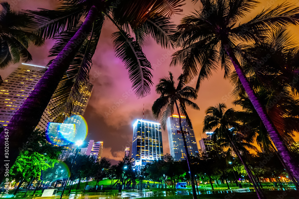 Fototapety, obrazy: Skyscrapers and palm trees in Miami Bayfront park