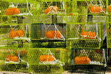 Colorful Crab Traps
