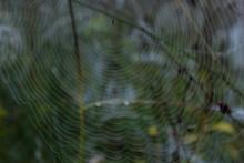 Fein Gewebtes Spinnennetz Mit ...