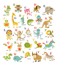 Cute Vector Cartoon Baby Animals  English Alphabet On White Background. Vector Illustration For Kids Education,  Language Study. Children Pattern With Animals And Letters.