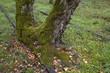 Auf einem alten Gleis in Berlin wächst eine Birke