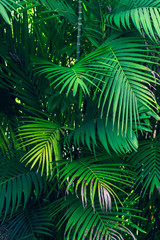 FototapetaLeaves abstract palm tropical leaves colorful flower on dark tropical foliage nature background dark blue foliage nature