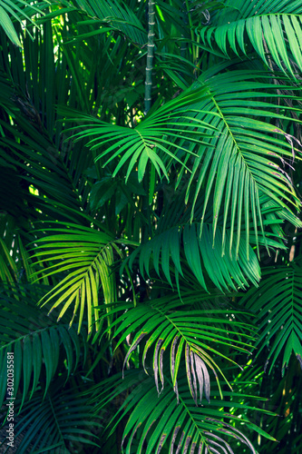 Foto auf Leinwand Palms Leaves abstract palm tropical leaves colorful flower on dark tropical foliage nature background dark blue foliage nature